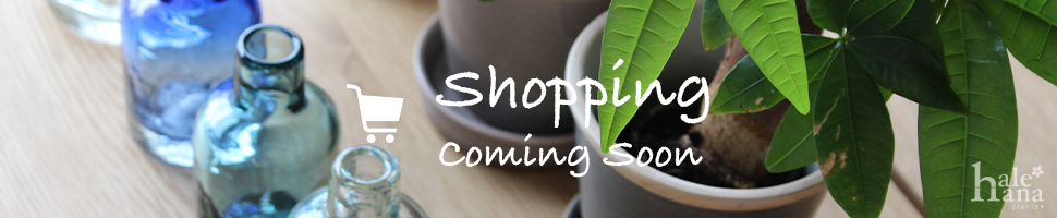 Shopping Site coming soon